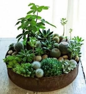 cactussen-ilovefashionnews